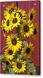 So Many Sunflowers Acrylic Print
