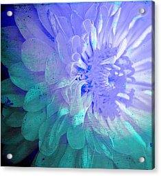 Soft Susy  Acrylic Print by Empty Wall