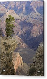 South Rim, Grand Canyon, Arizona, Usa Acrylic Print by Peter Adams