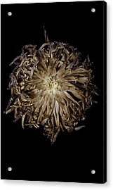 Spiky Flower Acrylic Print by Nathaniel Kolby