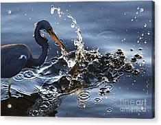 Splash Acrylic Print by Bob Christopher