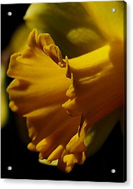 Acrylic Print featuring the photograph Splash Of Yellow by Karen Harrison