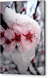 Acrylic Print featuring the photograph Spring Blossom Icicle by Kerri Mortenson