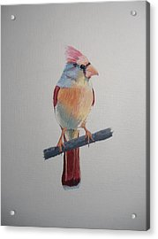 Spring Cardinal Acrylic Print by Norm Starks