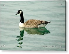 Spring Collection - Goose In Bay Harbor Acrylic Print