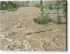 Spring Flood, Nicola River, Canada Acrylic Print by Kaj R. Svensson