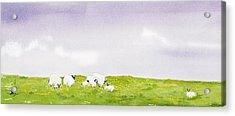 Spring In Ireland Acrylic Print