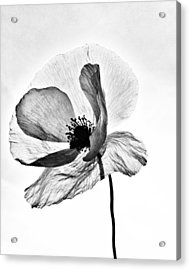 Acrylic Print featuring the photograph Standing Alone by Marianna Mills