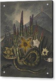 Stapelius  Acrylic Print by Robert John Thornton