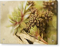 Succulents Acrylic Print by Bonnie Bruno