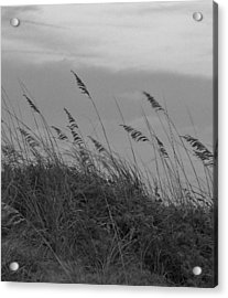 Summer Fairwell Acrylic Print by Stacy Sikes