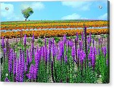 Summer In Hokkaido Acrylic Print by Frank Chen