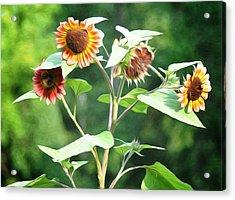 Sunflower Power Acrylic Print by Bill Cannon