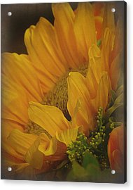 Sunflower Acrylic Print by Terry Eve Tanner