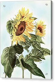 Sunflowers Acrylic Print by Leona Jones