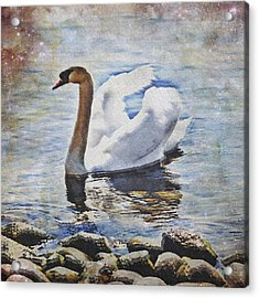 Swan Acrylic Print by Joana Kruse