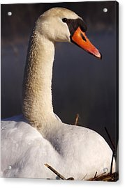 Acrylic Print featuring the photograph Swan Lake 1 by Gerald Strine
