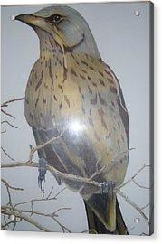 Swedish Bird Acrylic Print by Per-erik Sjogren