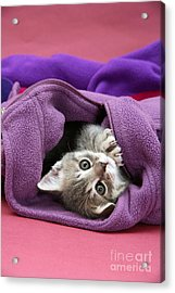 Tabby Kitten Acrylic Print by Jane Burton
