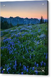 Tatoosh Sunrise Acrylic Print by Mike  Dawson