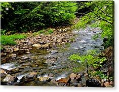 Tea Creek Monongahela National Forest Acrylic Print by Thomas R Fletcher
