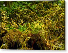 Temperate Rain Forest Acrylic Print by Adam Jewell
