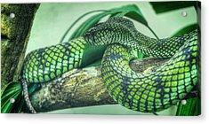 The Alert Green Snake Acrylic Print by Noah Katz
