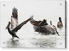 The Chase Acrylic Print by Paulette Thomas
