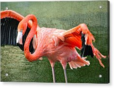 Acrylic Print featuring the photograph The Flamingo by Rosemary Aubut
