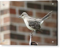 The Mocking Bird Acrylic Print by Rick Friedle