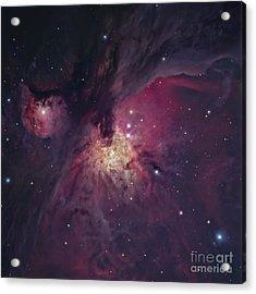 The Orion Nebula Acrylic Print by Robert Gendler