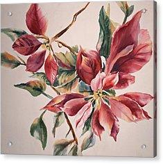 The Poinsettia Acrylic Print by Sharon K Wilson