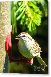 The Sparrow Acrylic Print by J Jaiam