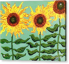 Three Sunflowers Acrylic Print by Genevieve Esson