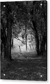 Through The Trees  Acrylic Print