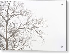 Tree Against A White Sky In The Early Morning Hours Acrylic Print by Gal Ashkenazi
