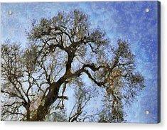 Tree Acrylic Print by Algimantas Gavenauskas