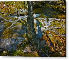 Tree And 3 Shadows Acrylic Print by George Ramos