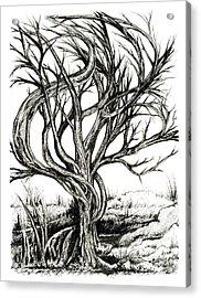 Twisted Tree Acrylic Print by Danielle Scott