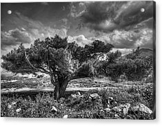 Tree In The Wind Acrylic Print