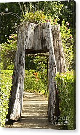 Tree Tunnel Acrylic Print by Blink Images