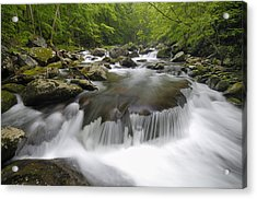 Tremont Spring In Great Smoky Mountains Acrylic Print by Darrell Young