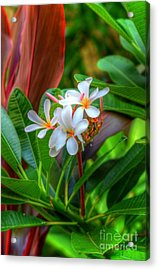 Tropical  Acrylic Print by Kelly Wade