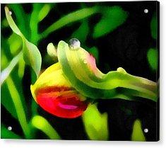 Tulip And Drop Acrylic Print by Odon Czintos