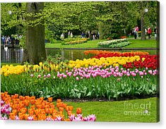 Tulip Garden  Acrylic Print by B S Karan