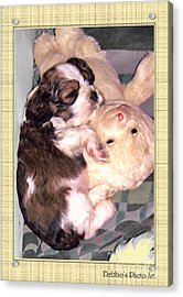 Two Stuffed Animals Acrylic Print by Debbie Portwood