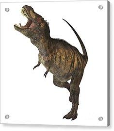 Tyrannosaurus Rex Acrylic Print by Corey Ford