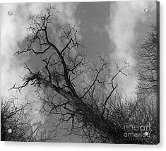 Up Tree Acrylic Print