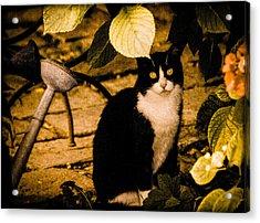 Venice, Italy - Venetian Cat Acrylic Print