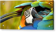 Vibrance Acrylic Print by Jennifer Harrington Relyea
